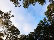 KT-Tree-CircleShot