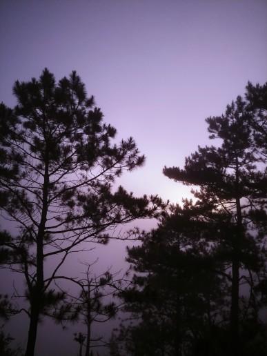 KT-Tree-Sun